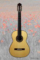 gitarre_bg_mohn_transp